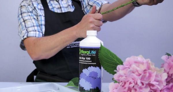 Quand couper les fleurs oasis floral products - Quand couper les fleurs fanees des hortensias ...